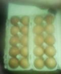 Куриные крупные яйца, Вязники