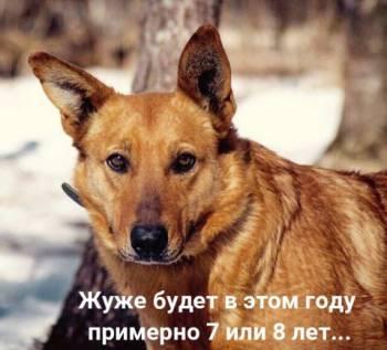 Жужа - собака с большим сердцем
