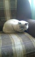 Кот на вязку, Бокино