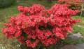 Растения для сада, дачи, Плеханово