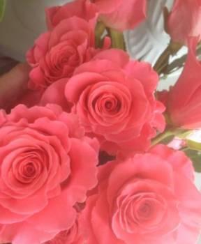 Роза, Китой, цена: 90р.