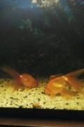 Рыба, Белореченск