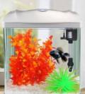 Стеклянный аквариум фирмы Sunsun на 7 литров, Дальнегорск