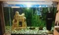 Продам аквариум, Партизанск