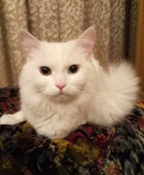 Годовалый котик ищет невесту