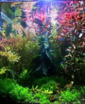 Обслуживание аквариумов на дому, в офисе, компании, Городок