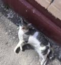 Стерелизованная кошка в добрые руки, Ростов-на-Дону