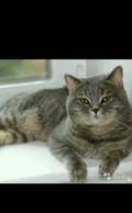 Кот, Минеральные Воды