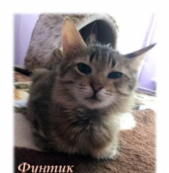 В добрые ручки котенок мальчик Фунтик, Яблоновый Овраг, цена: 50р.