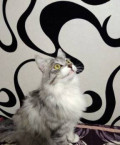 Кошечка 1, 5 года, Находка