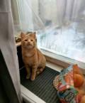 Котик, Рязань