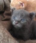 Симпатичные котята ищут друзей, Вологда