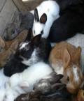 Крольчата, Шебекино