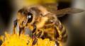 Пчелосемьи, Аткарск