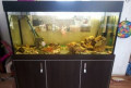 Аквариум в сборе с рыбками, Горняцкий