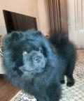 Собачья шерсть, Павлоградка