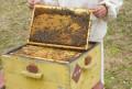 Пчелосемьи, Черемшан