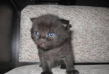 Котята, Сараи, цена: 2 000р.
