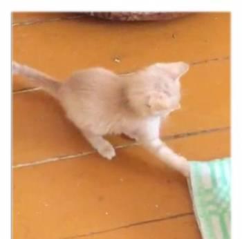 Котенок мальчик в добрые ручки, Новокуйбышевск, цена: 50р.