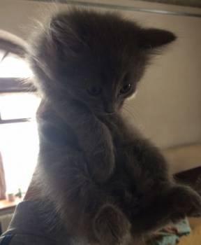Отдам бесплатно котят в добрые руки, Уруссу, цена: 10р.