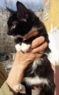 Котенок, мальчик, домашний, 4 месяца, Станционно-Ояшинский