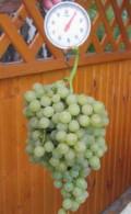 Саженцы винограда, Омск