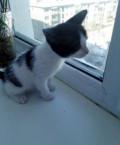 Отдам котенка (девочка), Омск