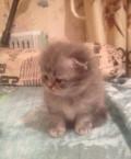 Продам котят, Красное-на-Волге