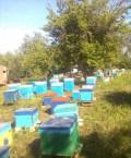Продается пасека, Борисоглебск