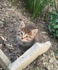 Котёнок, Кизляр