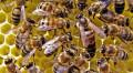 Продаю пчелопакет, Нововоронеж
