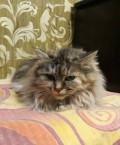 Кошки Василиса, Марфа, Бель, Лиза, Морозовск