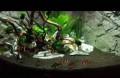 Продаю аквариум juwel trigon 190, Колышлей