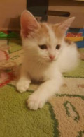 Шикарные котята для новосельцев, Ростов-на-Дону