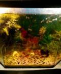 Продам два действующих аквариума 50 л и 75 л, Кораблино