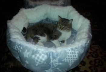 Лежанки для кошек и собак, Курган, цена: 600р.