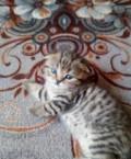 Котятки ищут дом, Староюрьево