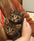 Обалденные котята 1, 5 мес, Товарково