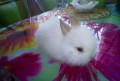 Продается декоративный кролик, Пенза