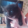Милые котята, Череповец