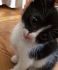 Два котика 2 месяца, Ростов-на-Дону