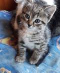 Отдам котенка в добрые руки, Белозерск
