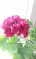 Цветы, Нижневартовск
