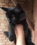 Котенку нужен любящий Человек, спасите жизнь, Коряжма