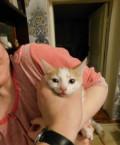 Отдам 2 котят и одного кота, Балтаси