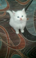 Котёнок, Рославль