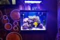 Морская рыба морской аквариум кораллы, Нефтекумск