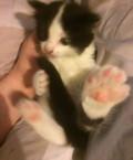 Котёнок девочка, Пермь