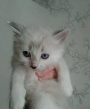 Котята в добрые руки, Югорск, цена: не указана