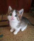 Котята ищут дом, Бугульма